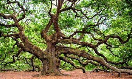 Quiz o drzewach – część 1