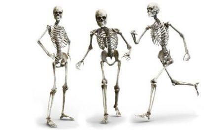 Quiz o anatomii – część 5