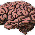 Quiz o anatomii – część 6