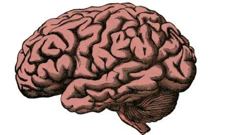 Quiz o anatomii – część 1