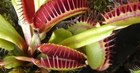 Quiz o roślinach – część 1