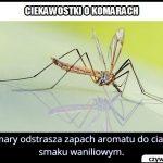 Jaki zapach odstrasza komary?