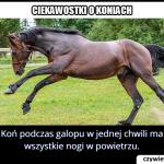 W jaki sposób  galopuje koń?