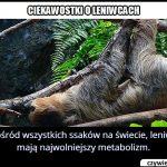 Który ssak ma   najwolniejszy metabolizm?