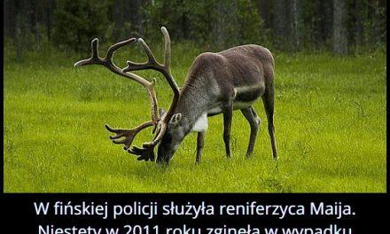 Jakie zwierzę służyło w fińskiej policji?