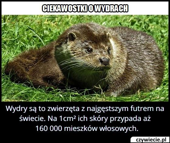 wydry