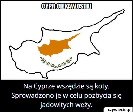 Dlaczego na Cypr sprowadzono koty?