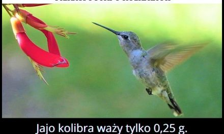 Ile waży jajko kolibra?
