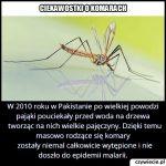 Jakie owady uratowały w 2010 roku Pakistan przed wybuchem epidemii malarii?