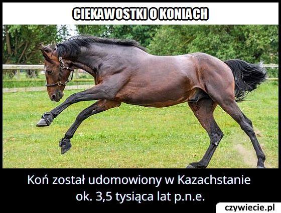 Gdzie i kiedy udomowiony został pierwszy koń?