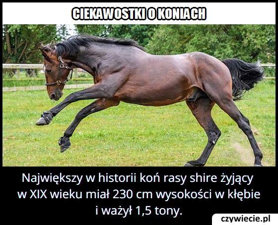 Jaką wysokość miał najwyższy w historii koń?