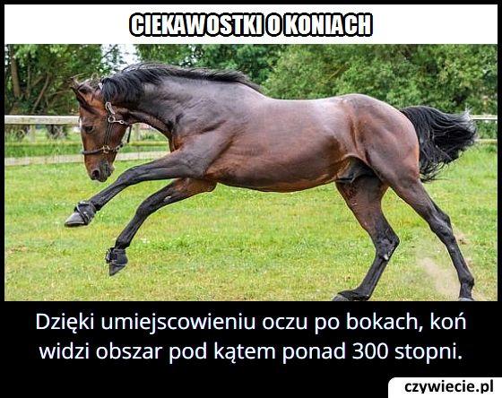 Jaki kąt widzenia mają konie?