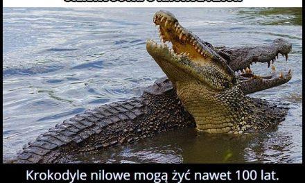 Ile żyją krokodyle nilowe?