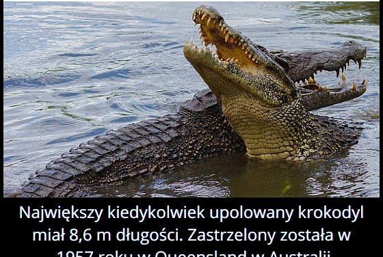 Jaką długość   miał największy upolowany krokodyl?