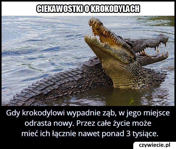 Ile zębów w ciągu całego życia mogą mieć łącznie krokodyle?