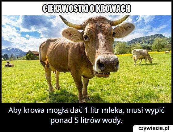 Ile litrów wody musi wypić krowa, żeby dać litr mleka?