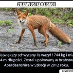 Ile ważył   najcięższy schwytany lis?