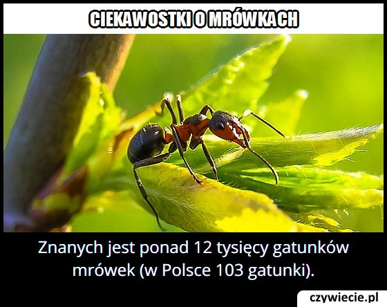 Ile jest gatunków mrówek?