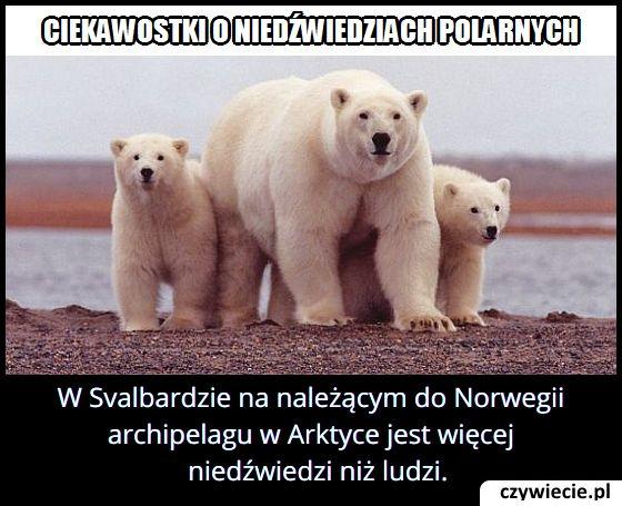 Na którym archipelagu jest więcej niedźwiedzi niż ludzi?