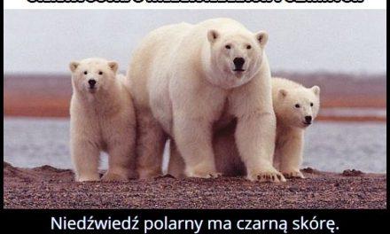 Jaki kolor   skóry ma niedźwiedź polarny?