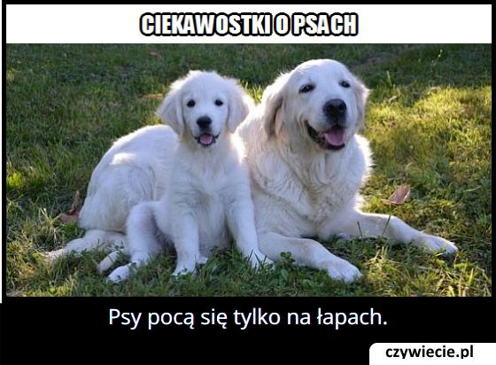 Jak pocą się   psy?