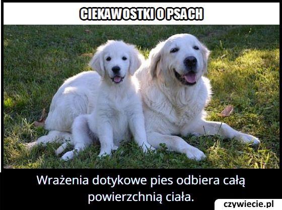 Którą częścią   ciała pies odczuwa dotyk?