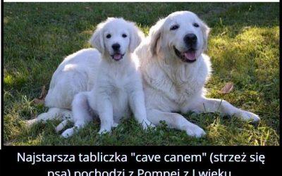 Z którego   wieku pochodzi najstarsza tabliczka ostrzegająca przed psem?