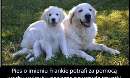 Jakie umiejętności posiadał pies Frankie?