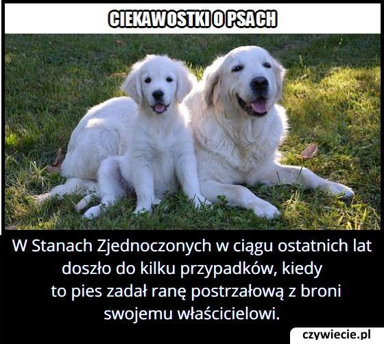 W którym kraju każdego roku zdarzają się sytuacje, w których pies postrzelił właściciela?