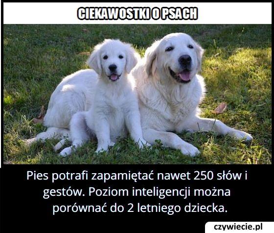 Ile słów i gestów potrafi zapamiętać pies?