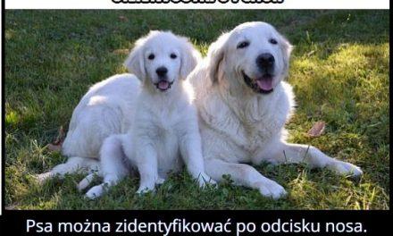 Każdy pies ma inny odcisk nosa?