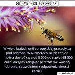 W którym kraju są największe kary za zabicie pszczoły?
