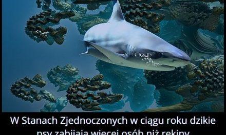 W Stanach Zjednoczonych więcej osób zabijają rekiny, czy dzikie psy?