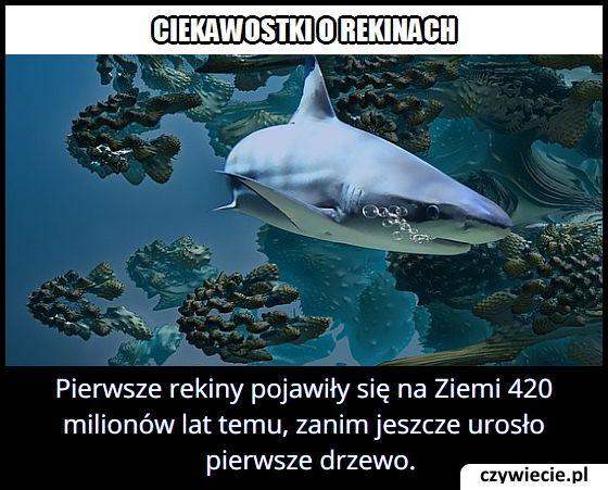 Kiedy na Ziemi pojawił się pierwszy rekin?