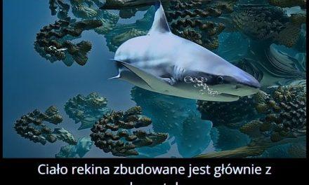 Z czego w większości zbudowane jest ciało rekina?