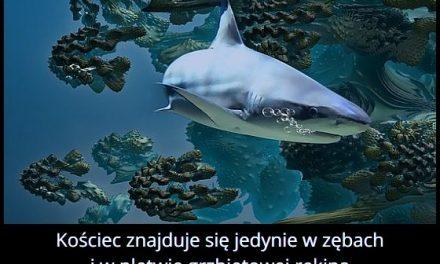 W jakich częściach ciała rekina znajduje się kościec?