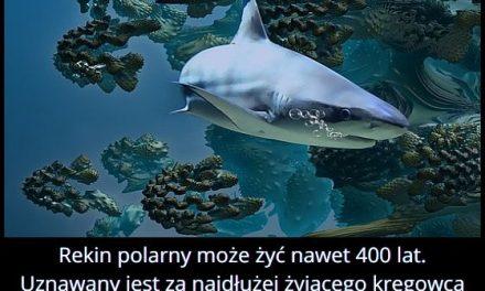 Ile może żyć   rekin polarny?