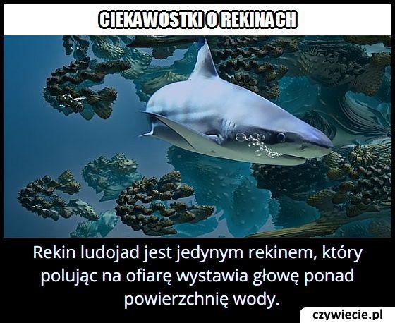 Który rekin jako jedyny wystawia głowę ponad powierzchnię wody?