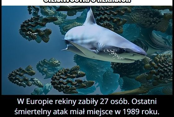 W którym roku po raz ostatni miał miejsce śmiertelny atak rekina w Europie?