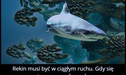 Co się stanie, gdy rekin przestanie płynąć?
