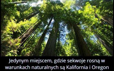Gdzie w warunkach naturalnych rosną sekwoje?