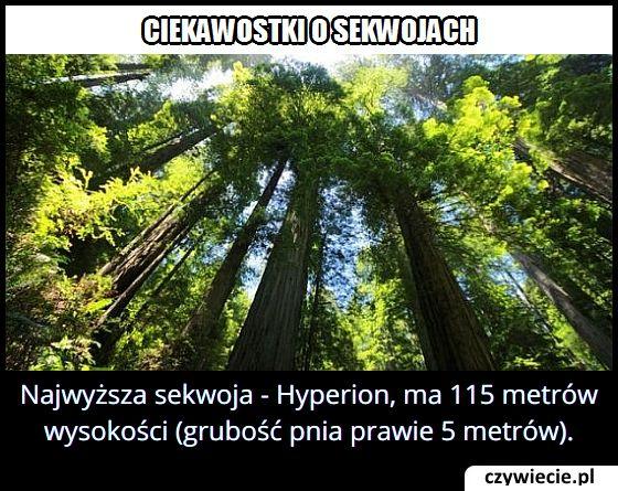 Ile metrów ma najwyższa sekwoja?