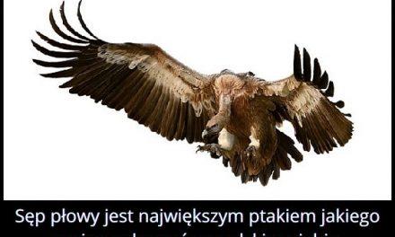 Jakiego największego ptaka można zobaczyć w Polsce?