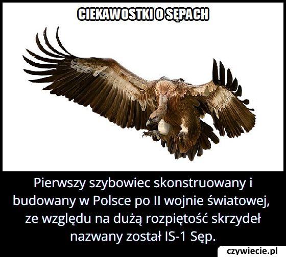 Jaki ptak znajdował się w nazwie pierwszego w Polsce szybowca?