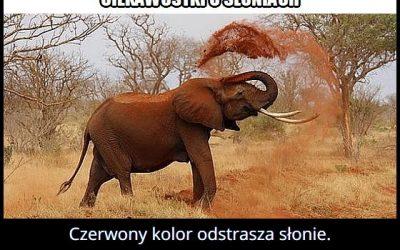 Jaki kolor   odstrasza słonie?