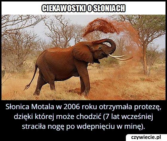 Co w 2006 roku otrzymała słonica Motala?