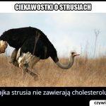 Ile cholesterolu zawiera jajko strusia?
