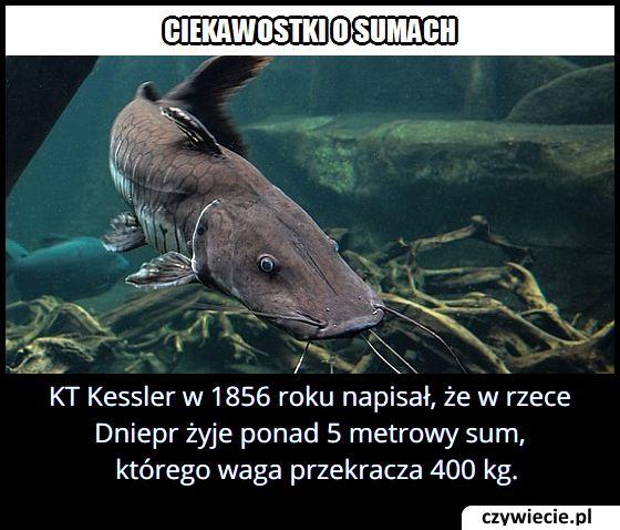 Jaką długość   miał sum odkryty w rzece Dniepr w 1856 roku?