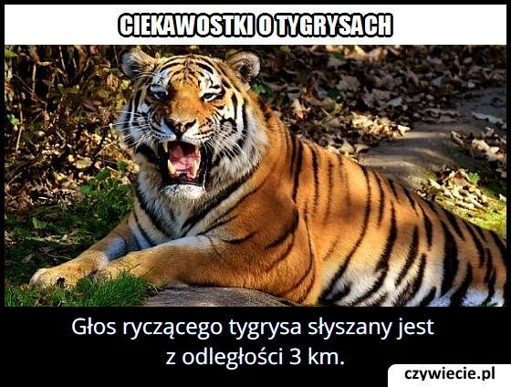 Z jakiej odległości można usłyszeć ryk tygrysa?