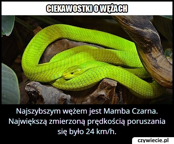 Jaką prędkość osiąga najszybszy wąż na świecie?